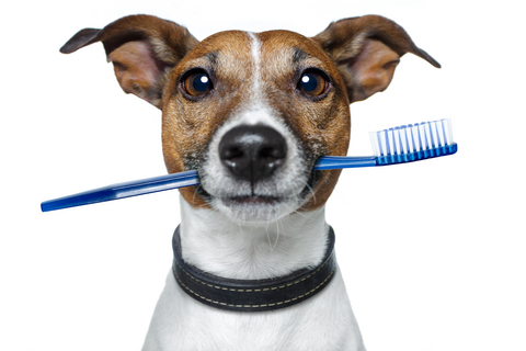 Dog Dental Toothbrush