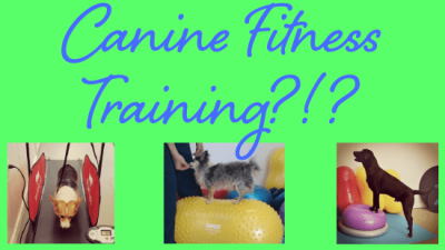 Riverside Veterinary Hospital canine fitness training blog